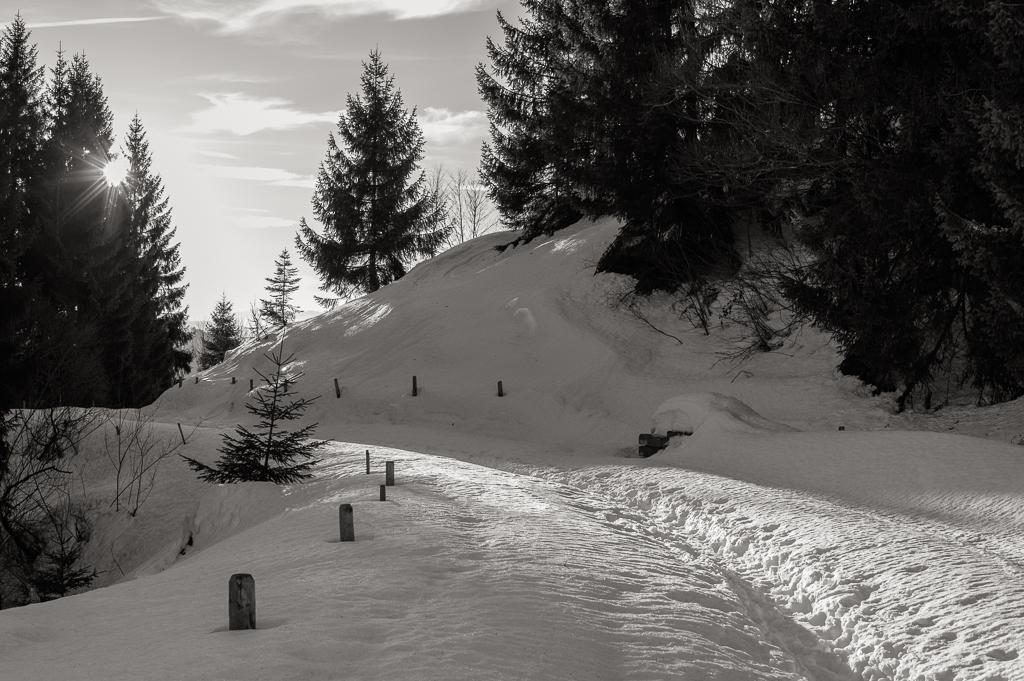 Leica M Monochrom • Zeiss ZM 50/2
