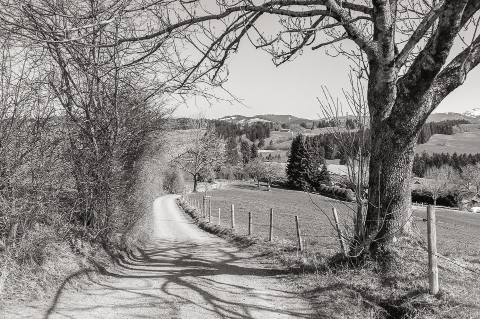 Leica M Monochrom • Zeiss ZM 35/2