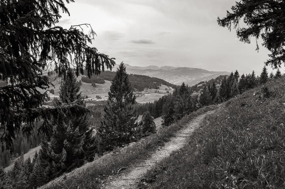 Leica M Monochrom • M-Rokkor 40/2